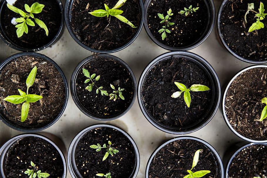Plants in plastic pots