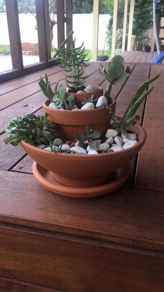 Succulent arrangement in three tiers