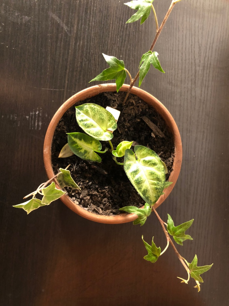 Plants in a clay pot