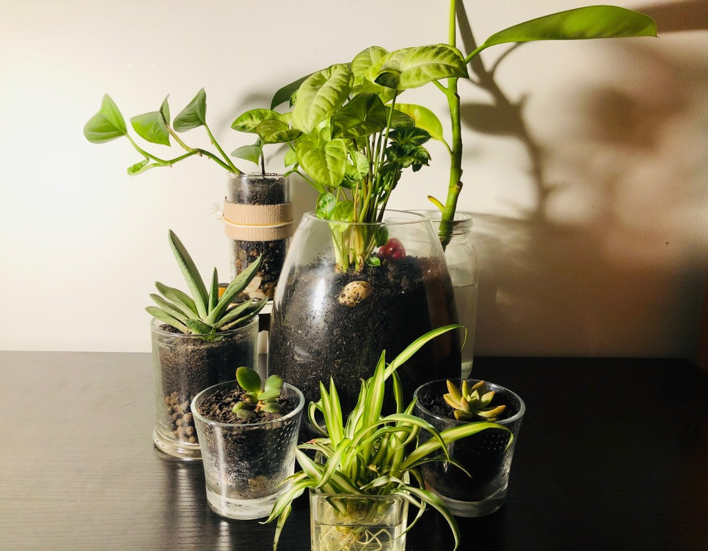Plants growing in glass