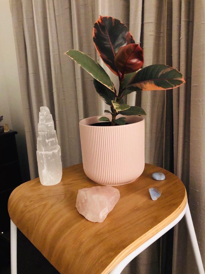"Ficus elastica ""Ruby"""