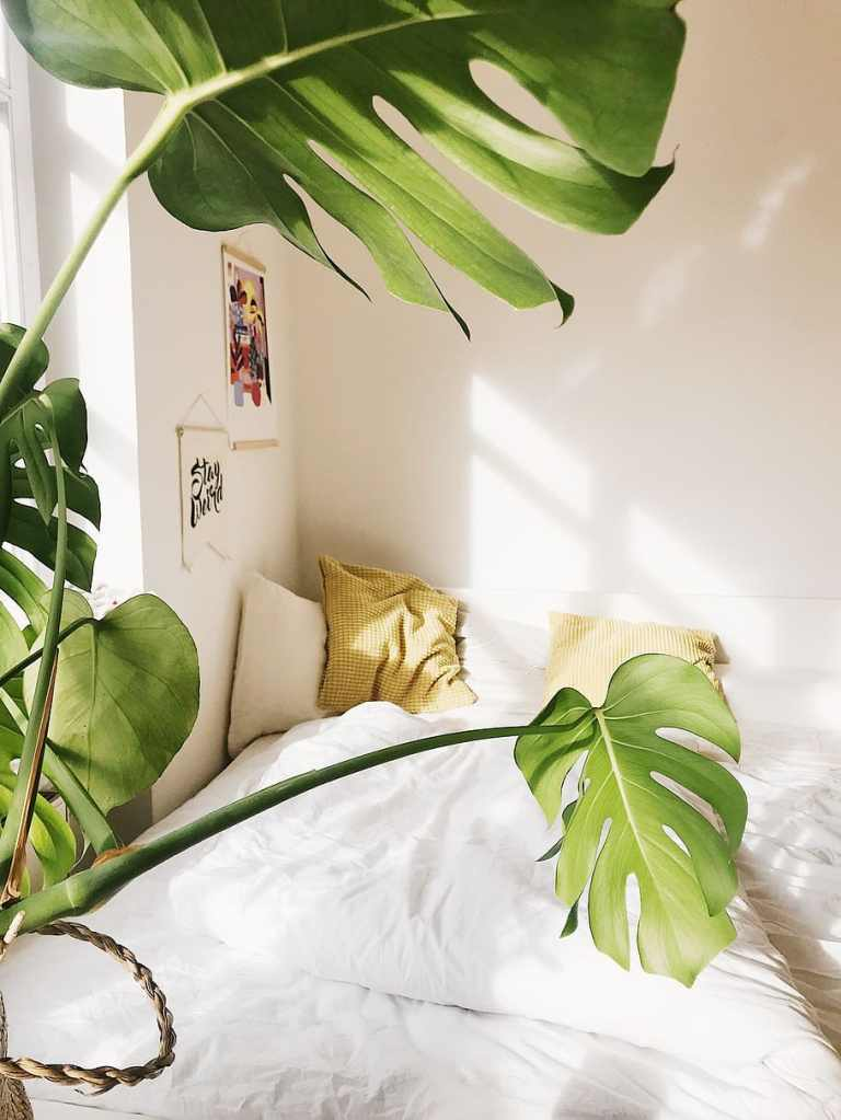 Bedroom with monstera
