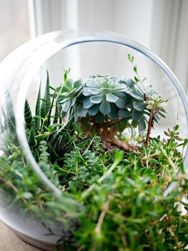 succulents in terrarium