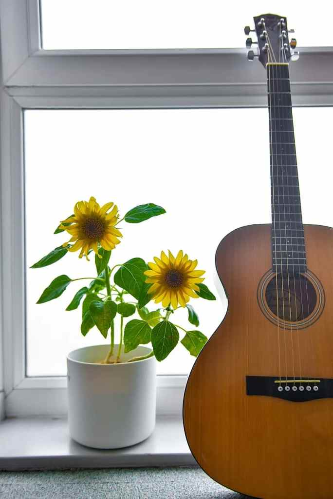 Sunflowers and guitar