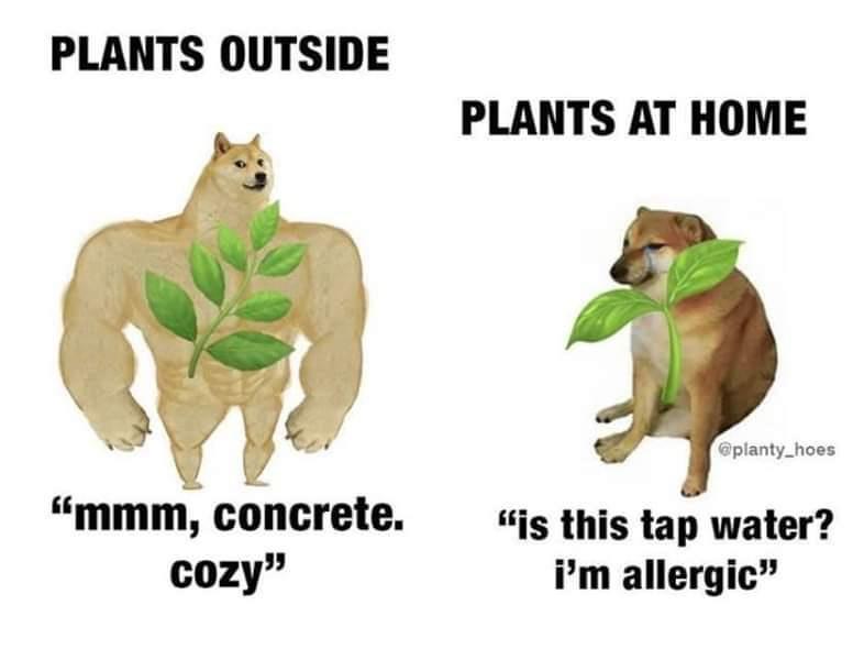 Plant meme 1